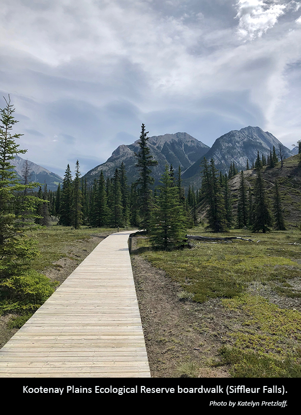 Kootenay Plains Ecological Reserve boardwalk-Siffleur Falls. Photo by Katelyn Pretzlaff