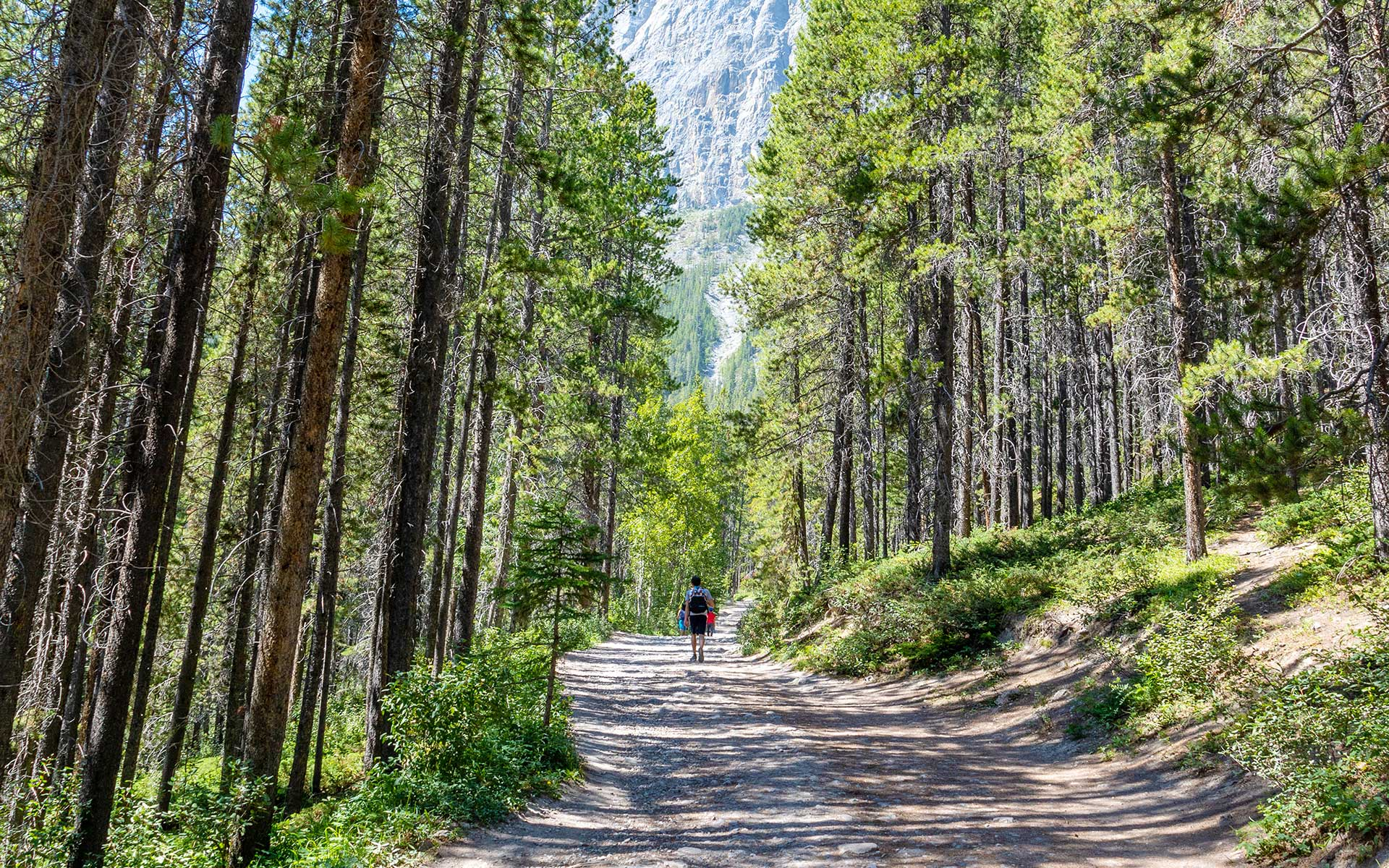 A person is walking up the gravel trail through pine trees on the Grassi Lakes hike.