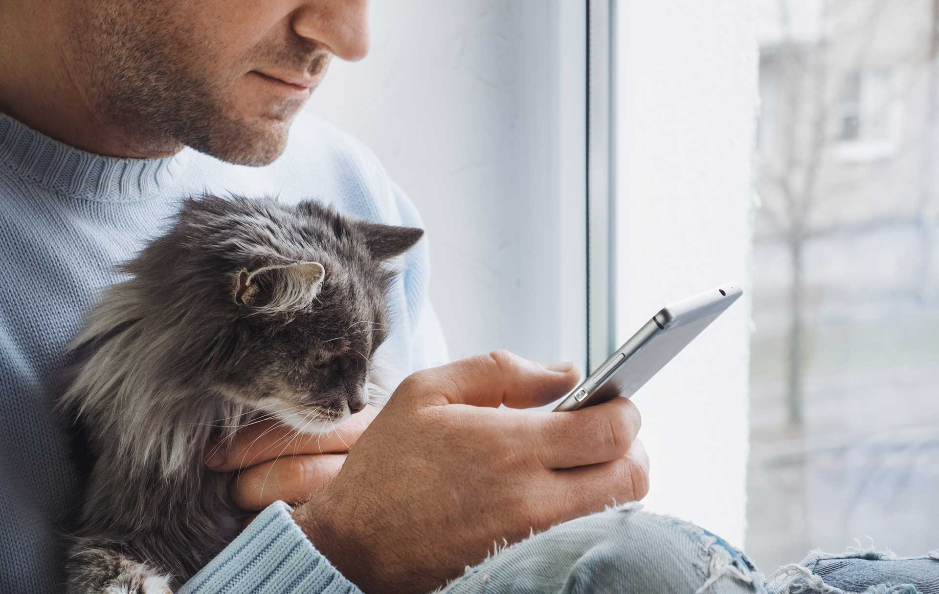 A man sits in a window looking at his smartphone. There is a grey, long-haired kitten in his arms.